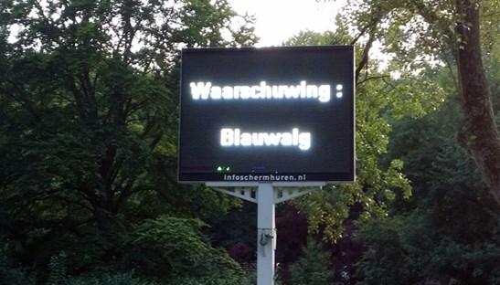 blauwalg_scherm
